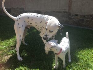 Toby Meets His Daughter Tallulah